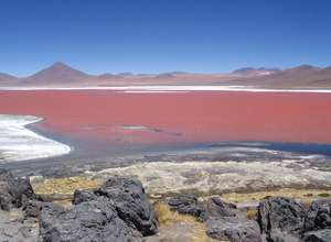 Bolivie - Laguna Colorada